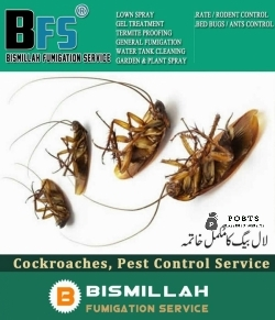 Bismillah Fumigation Get spray to fly treatment & Cockroaches