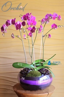 Brilliance in Pink - Orchid Arrangement